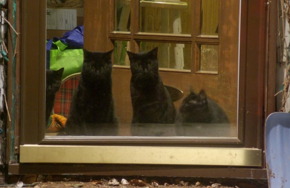 four black cats at the door at night