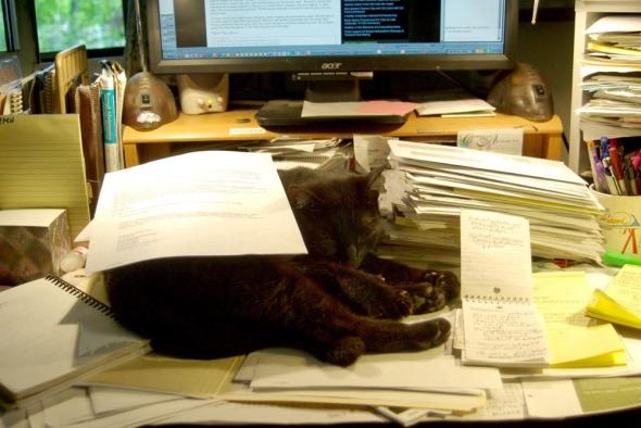 black cat under papers on desk