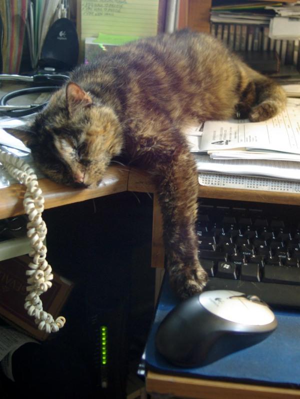tortoiseshell cat sleeping on desk