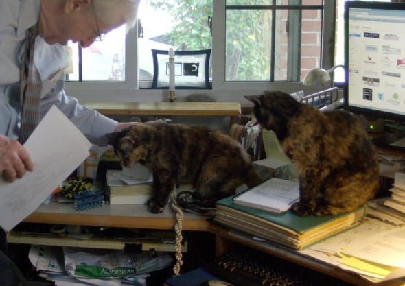two tortoiseshell cats greet person