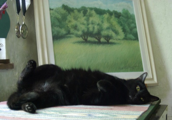 black cat lying on back in front of painting