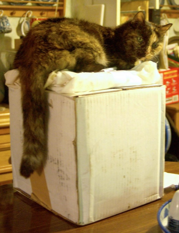 tortie cat on box