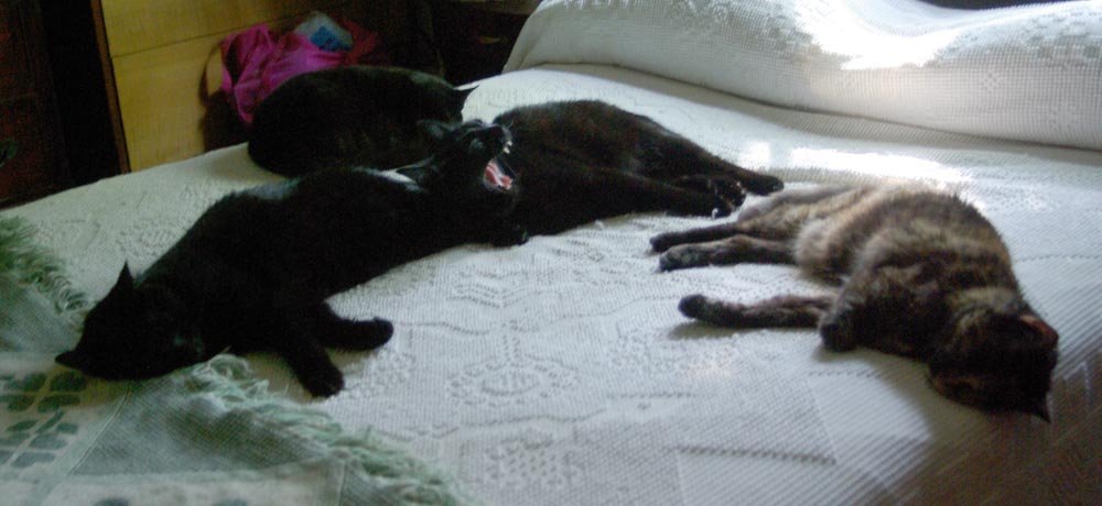 cats sleeping on the bed