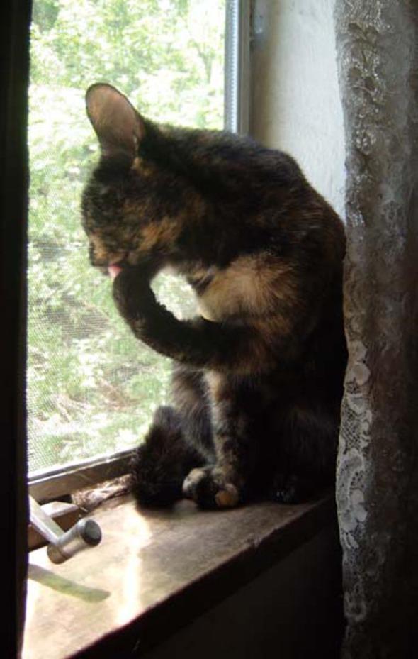 cat washing paw