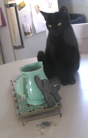 black cat on table