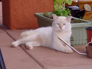 cat in outdoor colony