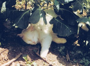 white cat in garden