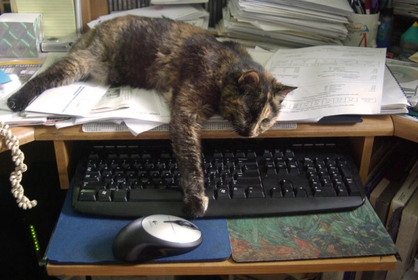 tortoiseshell cat on keyboard