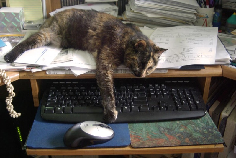 tortoiseshell cat on keyboard