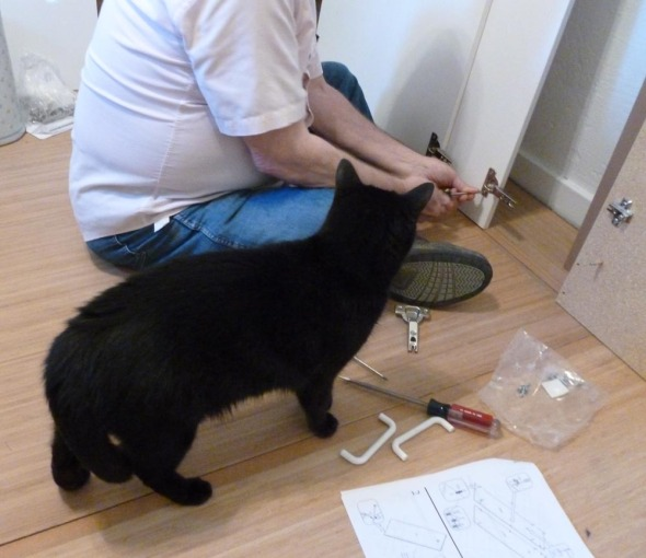 black cat watching person with tools