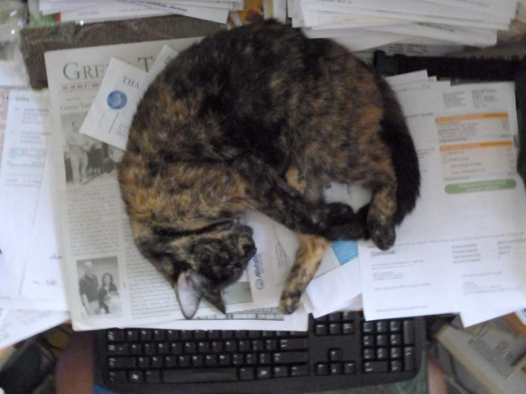 cat sleeping on papers