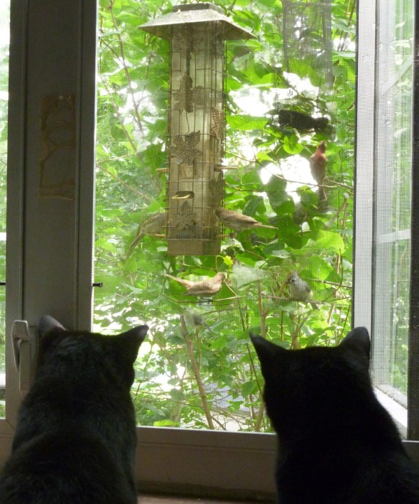 two black cats watching birds
