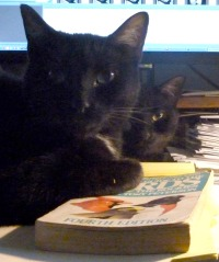 two cats with bird book