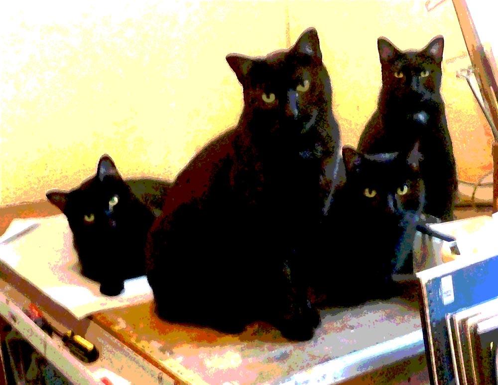 basement cat souls basement cats have come for my
