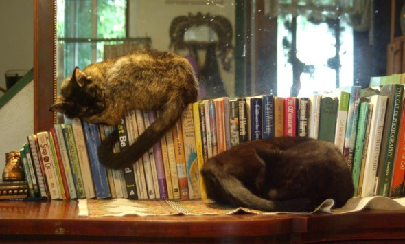 two cats with books