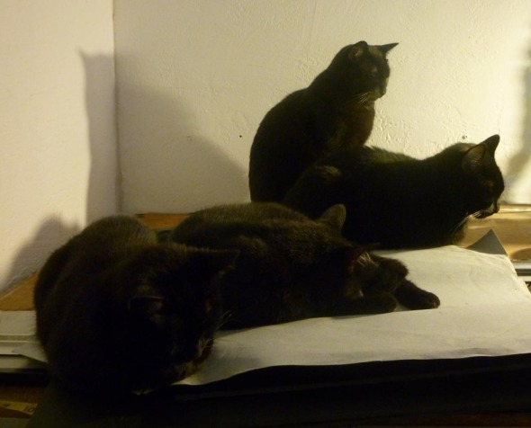 four black cats in dim light