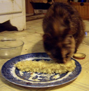 tortie cat with corncob