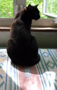 black cat in front of window