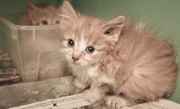 Carrick rescue kitten
