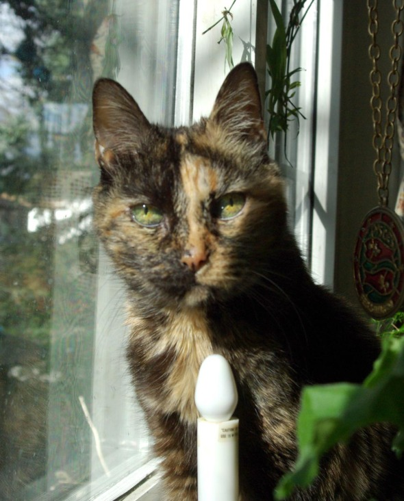 tortie cat expression