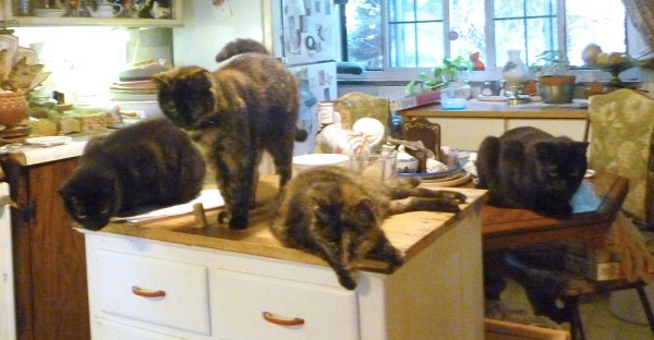 five cats in kitchen
