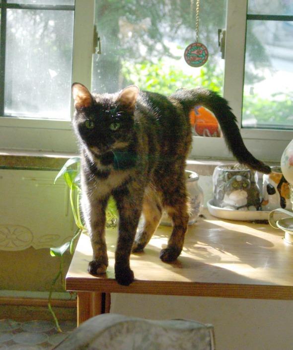 slender cat