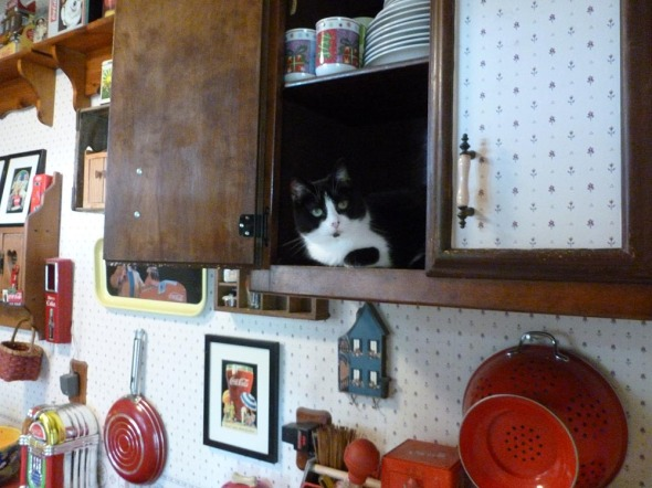 black and white cat in cupboard