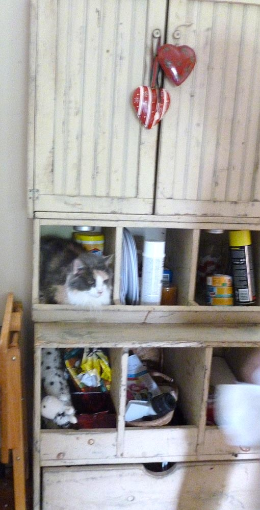 calico cat in cabinet
