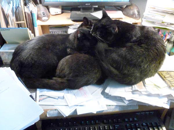three black cats bathing
