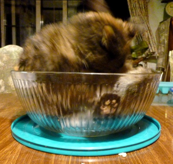 tortie cat in bowl