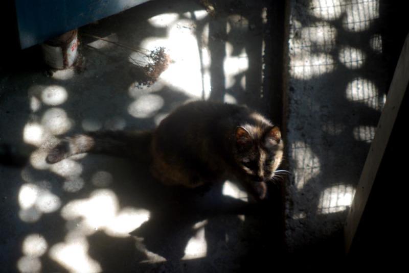 tortie cat in sun speckles