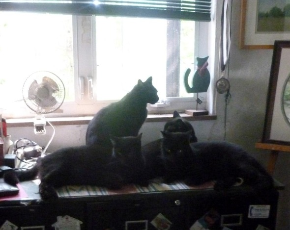 four black cats by the window