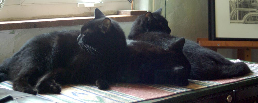 three black cats curled together