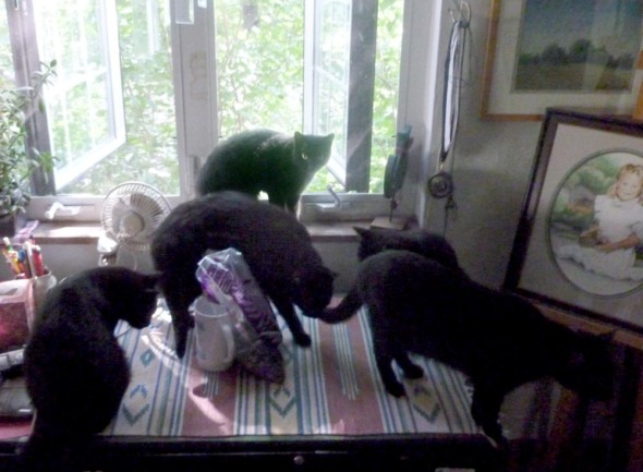 black cats by window