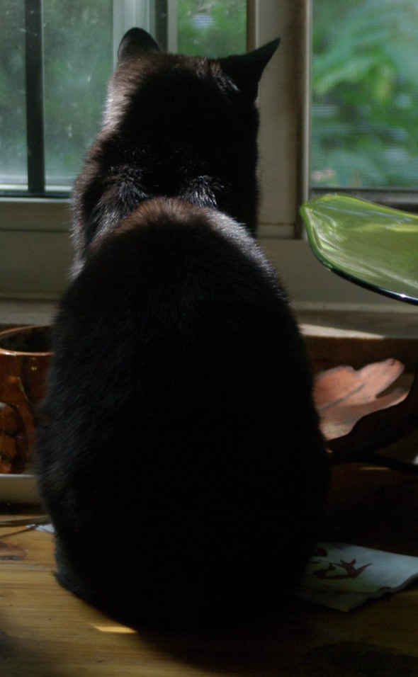 photo of black cat looking out window