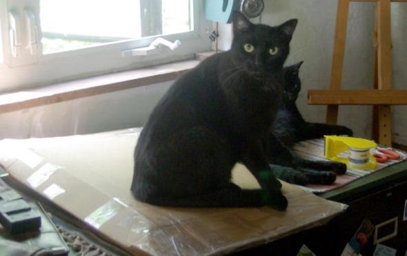 black cat on box