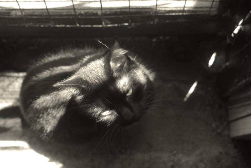 photo of black cat in shadows
