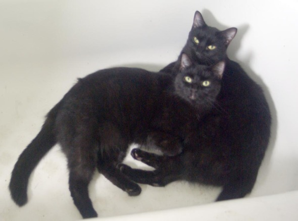 two black cats in the tub