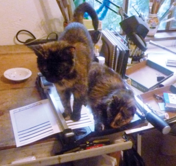 two tortie cats