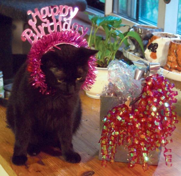 Black cat with birthday tiara