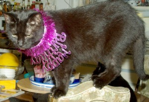 black cat on chair with purple necklace
