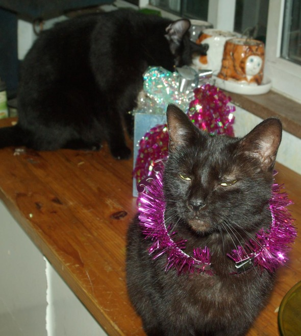 black cat with purple necklace