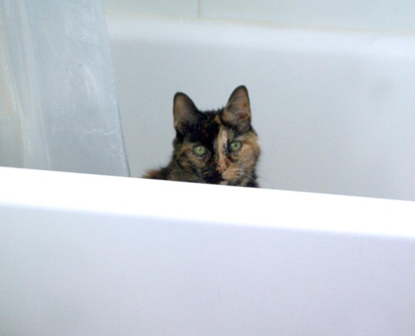 tortie cat in the tub