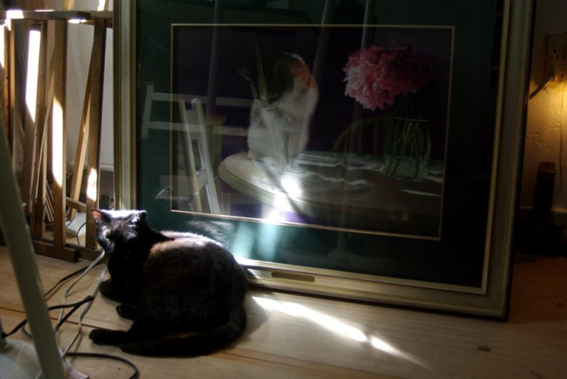 black cat sleeping on floor by paiting