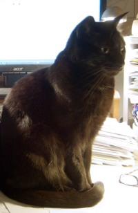 black cat in front of computer