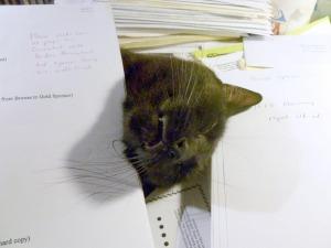 black cat under papers