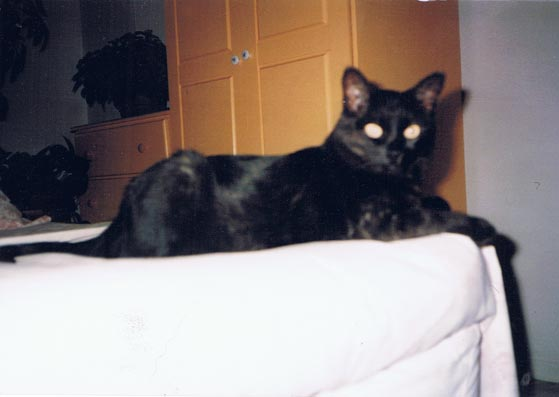 photo of black cat on bed