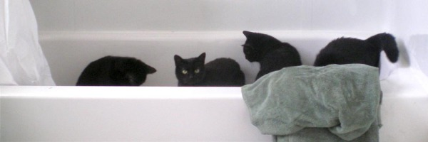 five black cats in tub