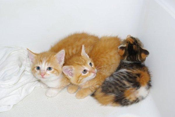 three kittens in box