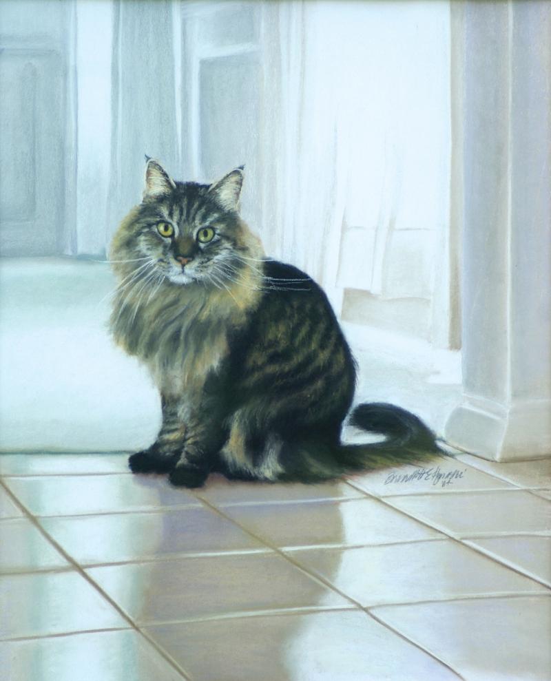 portrait of Maine Coon cat named Felix
